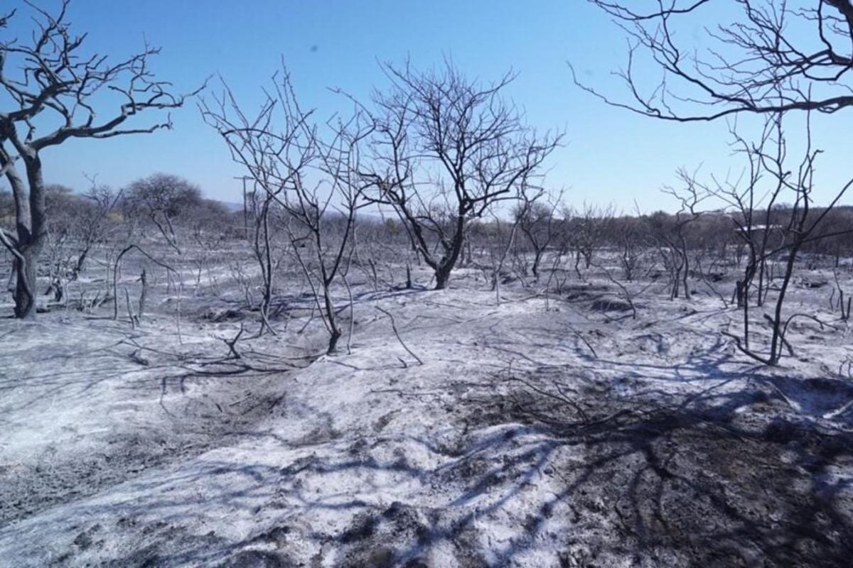 La FCA UNC colaborará en la recuperación de zonas afectadas por incendios