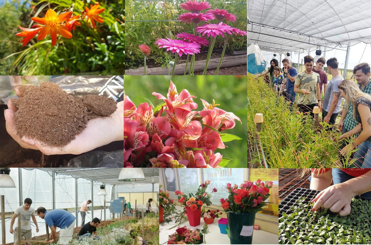 I Jornada de Floricultura en Cruz del Eje