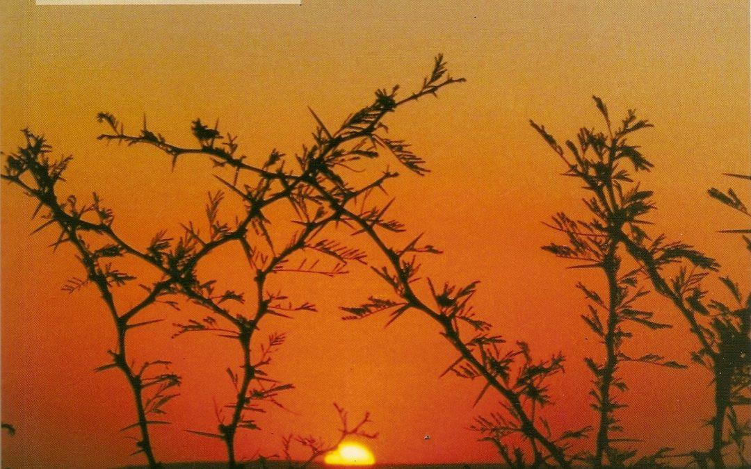 Bibliografía para Divisiones del Reino Vegetal y Ciclos Biológicos