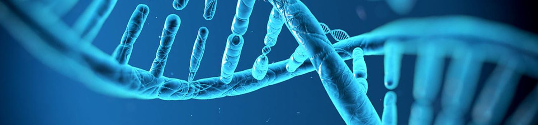 Slide 1 genetica