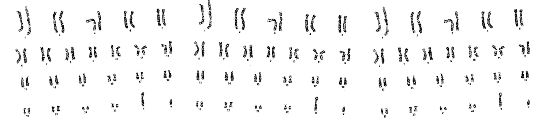 Slide 3 genetica